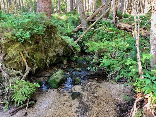 Quellwasser im Gebiet des Lusen, Nationalpark Bayerischer Wald