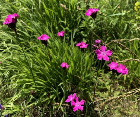 Blumen am AAR