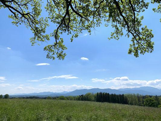 Blick auf die Bayerischen Alpen (Berghuhn)