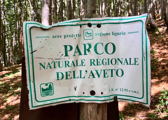 Parco Naturale Regionale Dell`Aveto, Liguria, Berghuhn