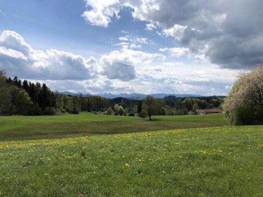 Blick in die Berge (Berghuhn)