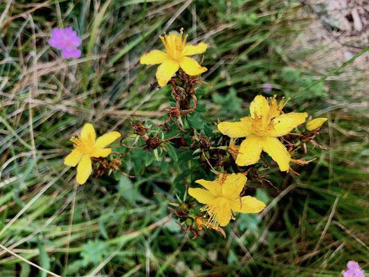 Blumen an der Strecke