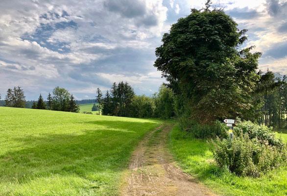 auf kleinen Wegen gehts nach Breitenberg