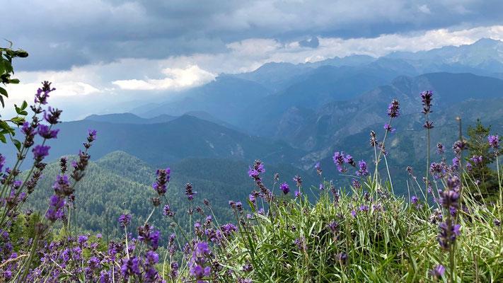 Lavendel am Berg