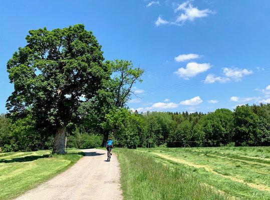 unterwegs auf ruhigen Nebenstraßen (Berghuhn)