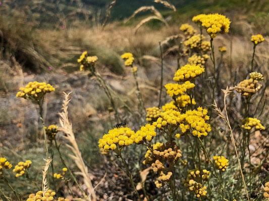 Blumen am Wegrand