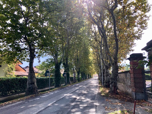 Allee nahe Cuneo