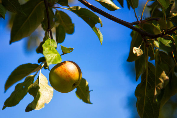 Bild 1 Apfel