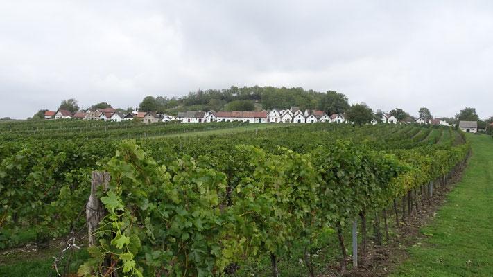 Kellerberg von Wildendürnbach