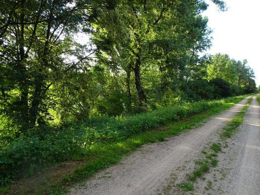 Rheinufer, leider undurchdringbar