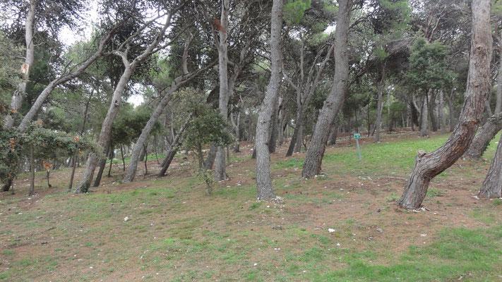 Das sind alles Stellplätze am Campingplatz in Premantura