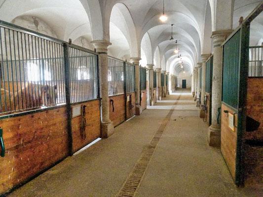 Schloss Hof, Stallungen mit echten Pferden