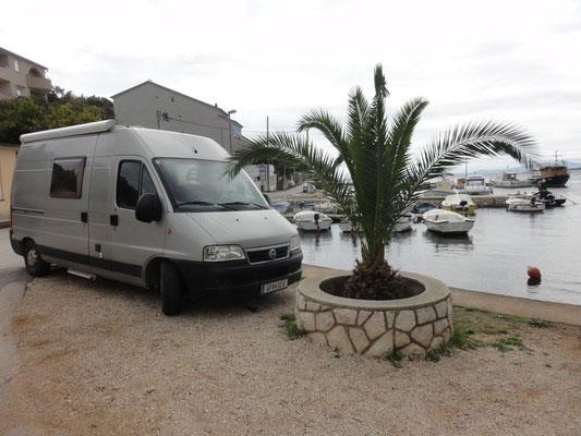 Nette Palme im Hafen von Lun
