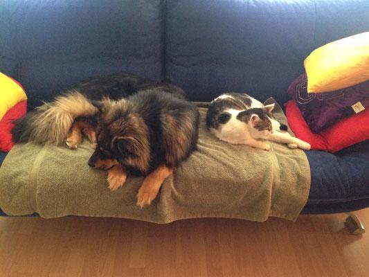 Santtu teilt den Schlafplatz mit Charly