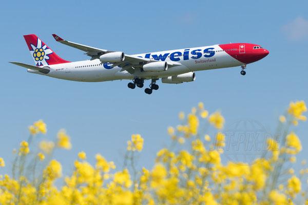 Edelweiss hat endlich ein paar Airbus A340 übernommen. Nun sieht man sie im Einsatz, hier in Kombination mit einem Rapsfeld in voller Blüte