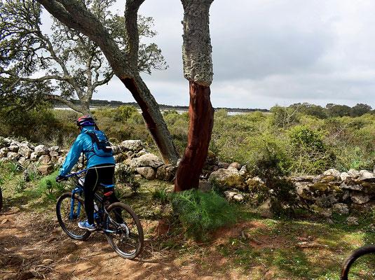 Mountain bike alla Giara di Gesturi
