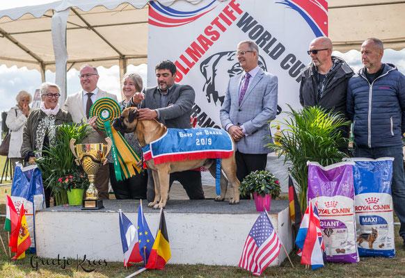 bullmastiff worldcup 2019 Frankrijk