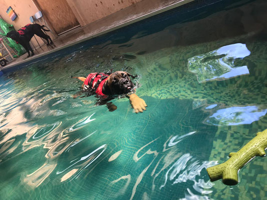 leren zwemmen, augustus 2019