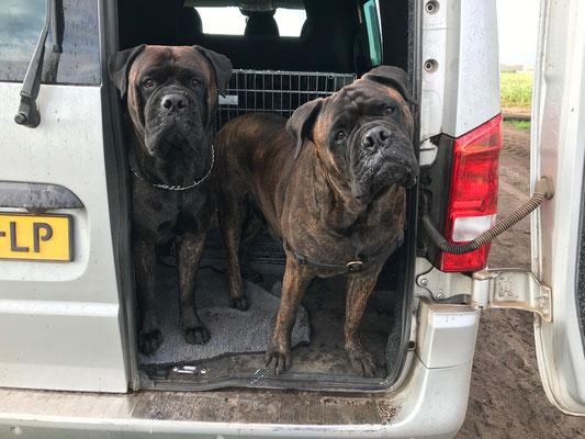 Blacky (rechts) en dochter Doris. Augustus 2020