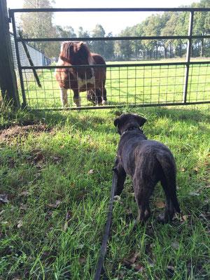 Blacky en onze pony Floris