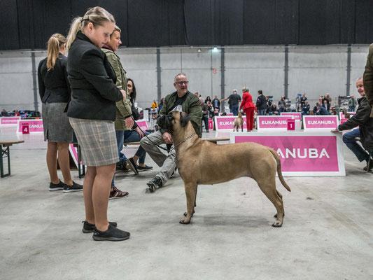November 2019 dogachtigen show
