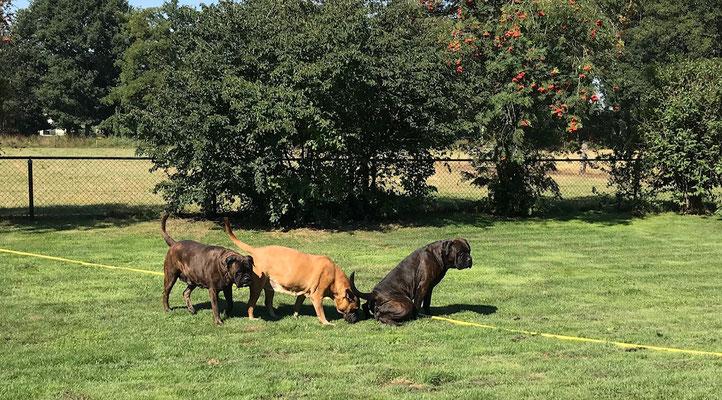 Doris (plassend), oma Roos en mama Blacky. Augustus 2020