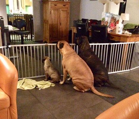 op Hugo wachten samen met oma Roos en Blacky