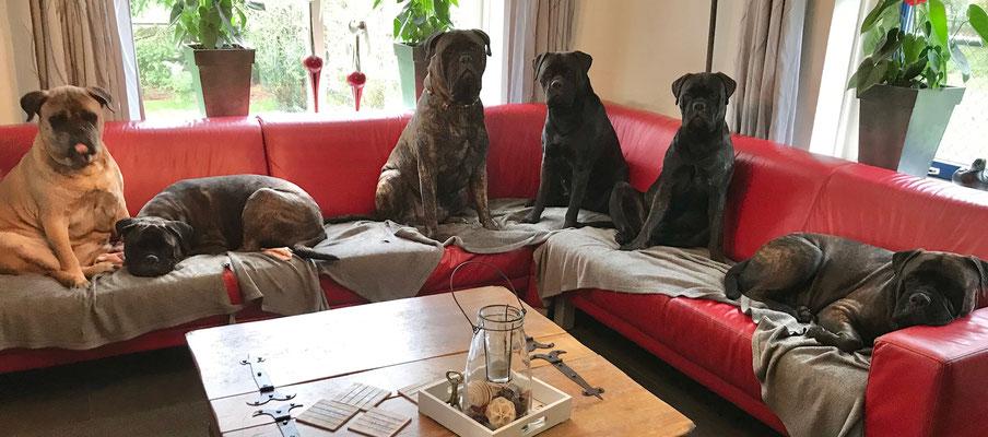 Roos, Blacky, Bear, Saartje, Viva en Doris