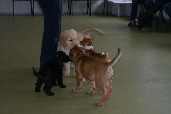 puppy cursus met kleine Freek