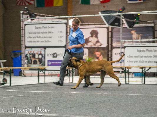 JCAC en RES best teef, hondenshow Oss (15 mnd oud)