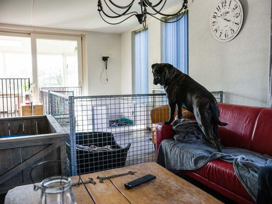 werpkist staat al in de woonkamer, met er omheen een ruime puppyren voor alle privacy.