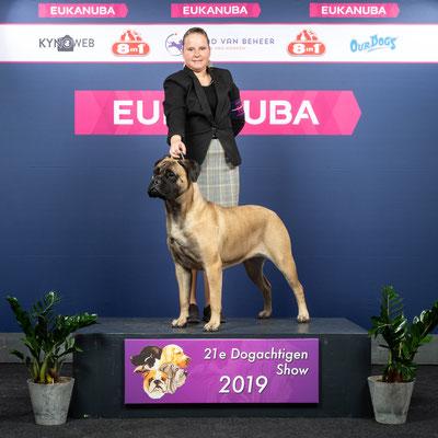 Jeugdkampioen! November 2019 Dogachtigen show