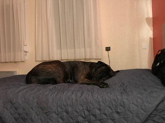 Doris had ook een eigen bed in onze tweepersoonskamer