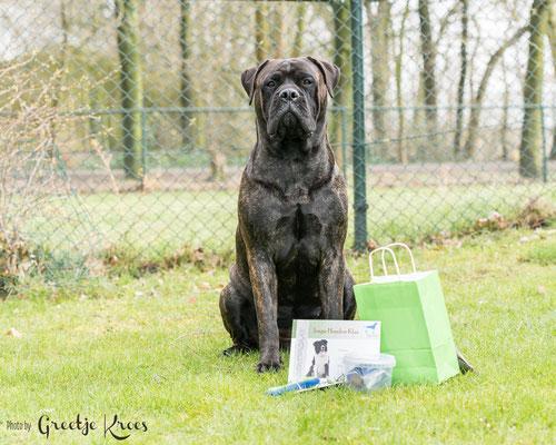 geslaagd voor de jonge hondencursus bij hondenschool Dogwish, maart 2018