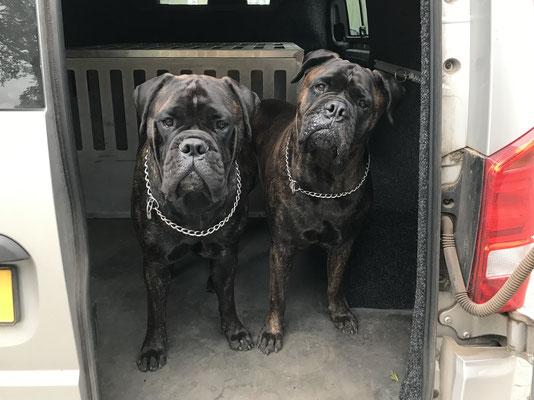 Blacky (rechts) en kleindochter Viva juni 21