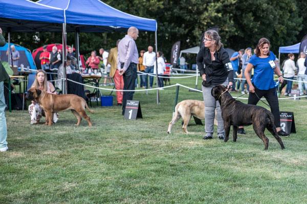 7 juli 19 dogshow Echt
