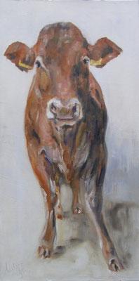 Limousin | oil on linen | 50x100cm