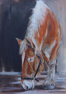 Belgisch Trekpaard | oil on linen | 100x140cm