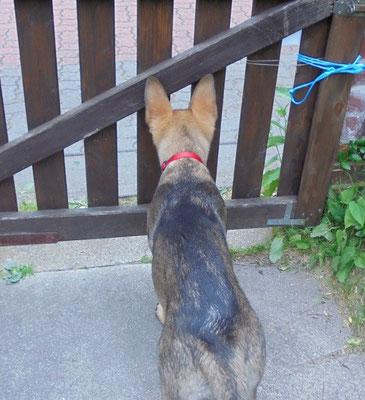 früh übt sich wer ein Wachhund werden möchte ;-)