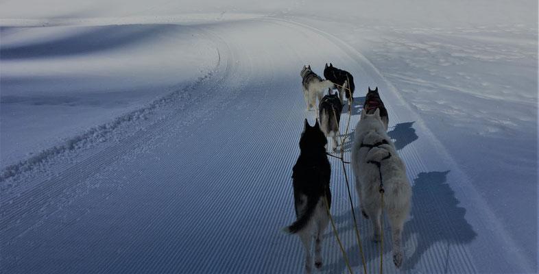 Iditarod -