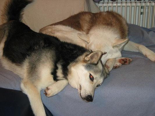 Borea und Chenook lieben sich seit Jahren