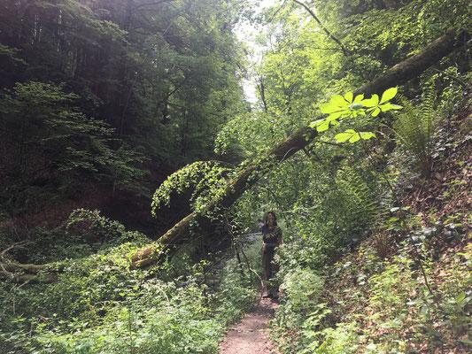 Einmal Urwald -