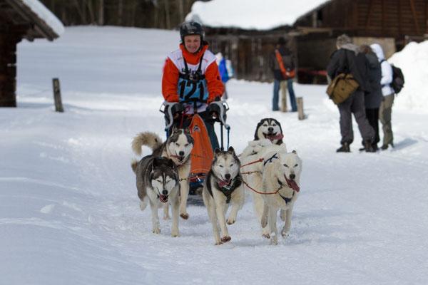 Im Rennfieber, Snow führt sein Sechser-Gespann am Happy-Dog-Rennen in Kandersteg - es war sein letztes Rennen.