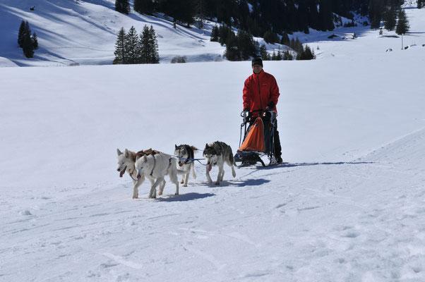 Snow ist 12 jährig und zieht mit seinem gleichaltrigen Kumpel Chenook, dem um ein Jahr älteren Highlander und Borea zusammen ihr Herrchen und alle haben Spass daran.