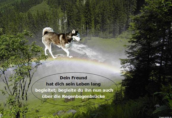 """""""Regenbogenbrücke""""  (Text Huskypost, Foto Internet)"""