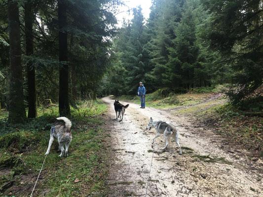 Irgendwo im Wald traf man die Fahrradfahrer plötzlich zu Fuss wieder an, und  gemeinsam ging man eine Wegstrecke weiter...