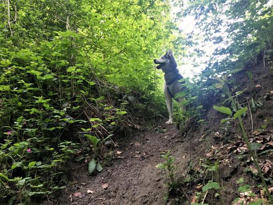 Halloo, ich bin der Yukon und mir gehört die Welt und ich habe was entdeckt, yeeee! - Aber wartet, ich komme gleich runter!