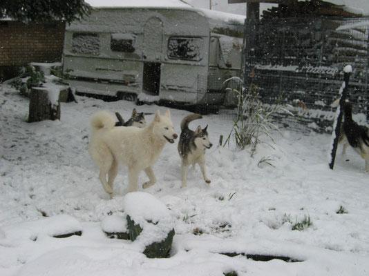Wildes Fangen-Spiel im ersten Schnee