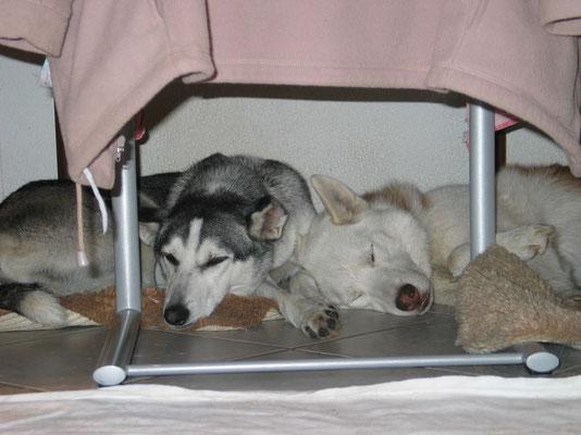 Unterm Tisch im Dunkeln, lässt sich gut munkeln; Zwergli und Chenook