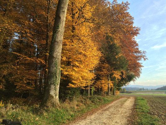 Der Herbst verschenkt uns im Übermass seine bunte Farbenpracht.